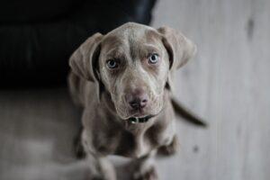 skuteczna-ochrona-przed-kleszczami-u-psa
